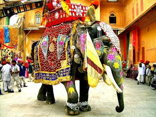 800px-Decorated_Indian_elephant