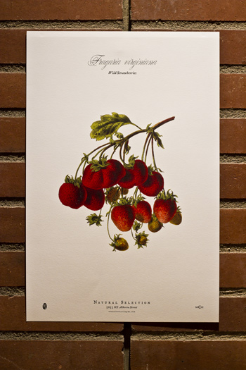 Poster-strawberry